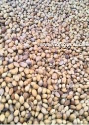 Coriander / धनिया / கொத்தமல்லி (250g)