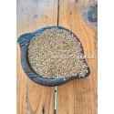 Little millet (samai) - Boiled / कुटकी- उसना / சாமை புழுங்கல்