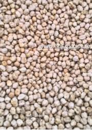 Brown Kabuli Channa /  काबुली चना / கொண்டைக்கடலை( 500g)